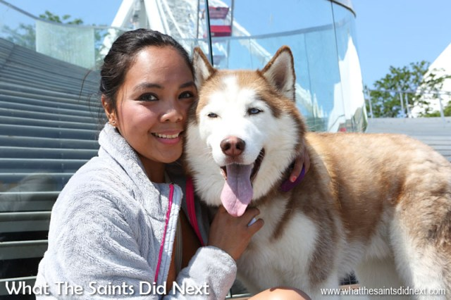 What People Say About Chicago - Nurse Mitzi with her Siberian Husky on Navy Pier in Chicago. Mitzi recommends Navy Pier as the place for visitors to see in the city.