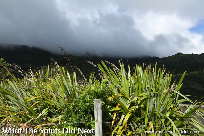 Flax growing around Bamboo Hedge in Sandy Bay. The heavy cloud cover seen over St Helena's central peaks is typical weather up higher.