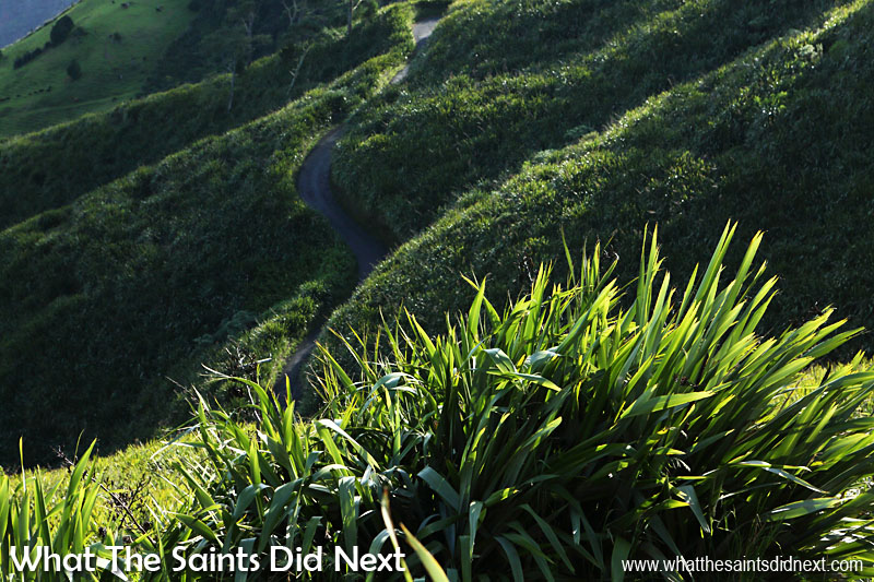New Zealand flax covering the Sandy Bay slopes on St Helena. The road which can be seen curving down into the bay is often referred to as the 'Sandy Bay Ridges.'