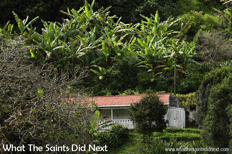 A typical view across one of the valleys in Sandy Bay with banana trees.