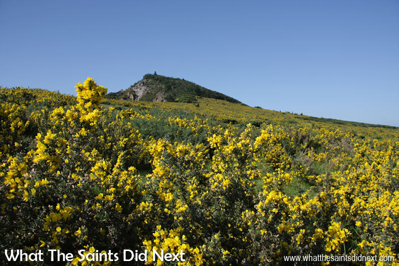 This is a picture we took in September 2009 when the furze bushes covered the upper slopes of Flagstaff. Very pretty when they flowered but otherwise not nice. The effort by the St Helena National Trust to remove the furze has been impressive with the reclaimed land now used for sheep farming, as we saw earlier.