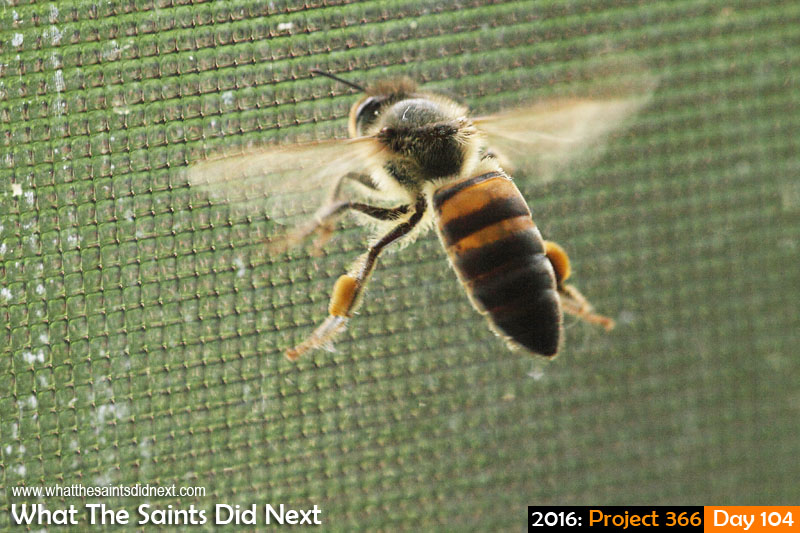 'Cabbage do-down'<br /> 13 April 2016, 12:21 - 1/500, f/8, ISO-400<br /> Buzzing around