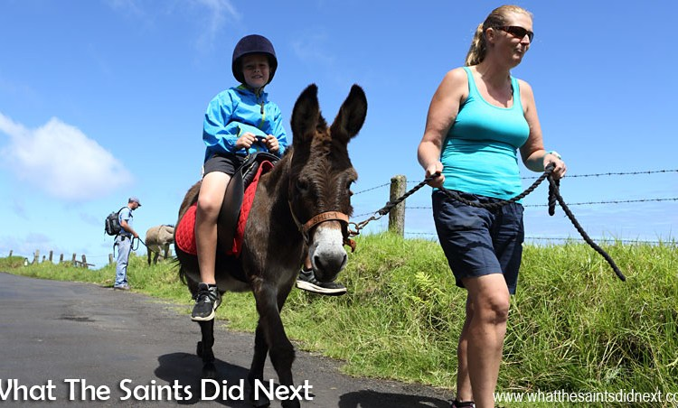 The St Helena Donkey Home