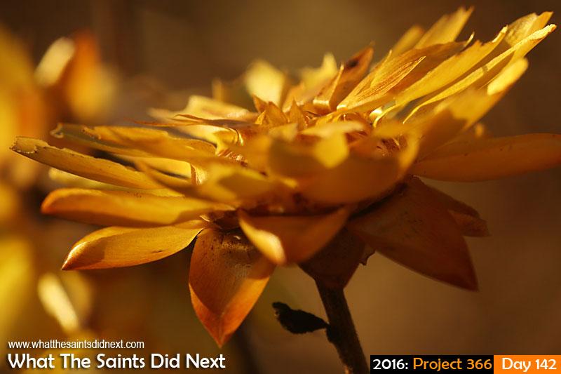 'Eagles &amp; Devils'<br /> 21 May, 2016, 17:30 - 1/160, f/11, ISO-400<br /> Everlasting flower.