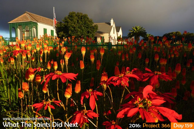 'Belfast' 7 June 2016, 17:30 - 1/500, f/3.3, ISO-100 - Panasonic Lumix DMC-FT5 What The Saints Did Next - 2016 Project 366 Red Hot Poker flowers in the gardens of Longwood House, St Helena.