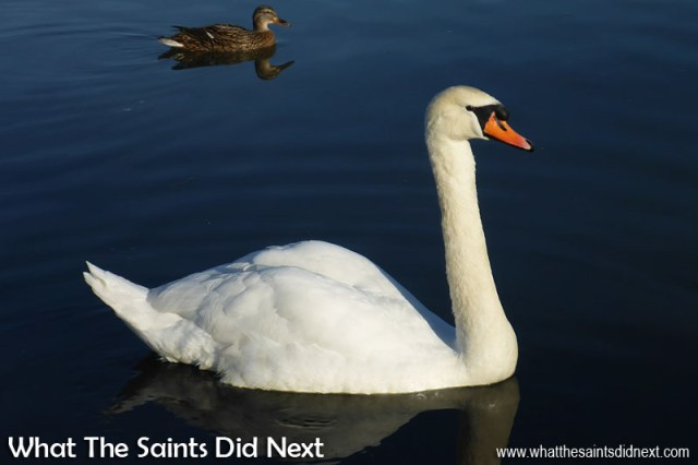 The Panasonic Lumix DMC-FT5 does well photographing wildlife at Riverside Park, in Lechlade, Gloucestershire, in UK.
