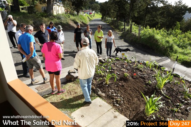 'Romeo lives' 3 September 2016, 15:55 - 1/250, f9, ISO-200 What The Saints Did Next - 2016 Project 366 Judges in the district clean-up come to see the new roadside flower bed in Alarm Forest.