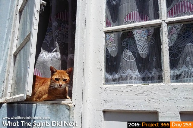 'Tribal Attraction' 9 September 2016, 11:57 - 1/2982, f2.4, ISO-50 - Samsung Galaxy A3 What The Saints Did Next - 2016 Project 366 A window cat in Jamestown, St Helena, taking in the midday sights.