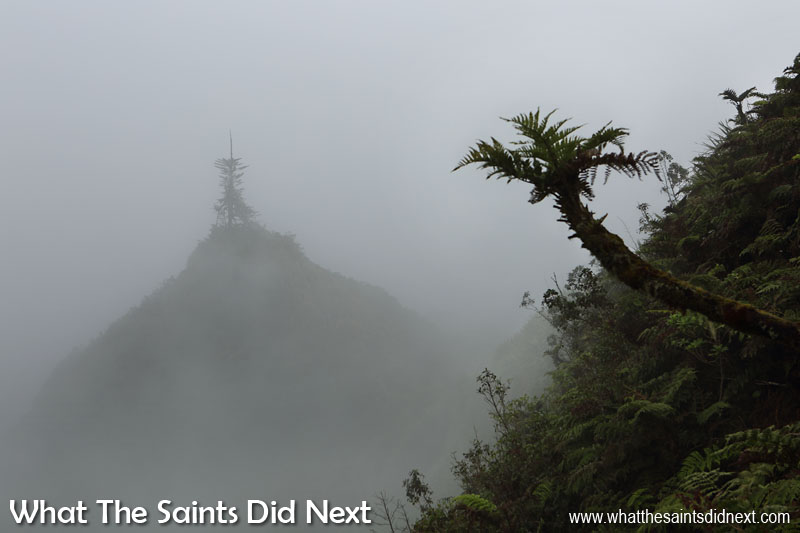 Diana's Peak National Park is also a cloud forest. In dry seasons cloud forests can double the effective rainfall and increase it by around 10% in the rainy season, making this a vital source of water for St Helena. Walking in the cloud forest can be an enchanting experience.