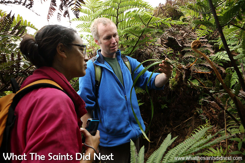 Terrestrial Conservation Officer, Mike Jervois, sharing some fascinating facts with us about the cloud forest and endemic habitat as we make our way under the tree fern canopy. Diana's Peak National Park, St Helena Island.