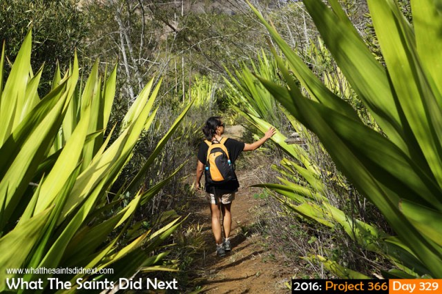 'Tokyo drift' 24 November 2016, 15:46 - 1/320, f8, ISO-200 What The Saints Did Next - 2016 Project 366 Hiking through the aloes in Longwood, St Helena.