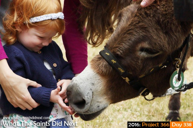 'VSS Unity' 3 December 2016, 16:58 - 1/320, f8, ISO-400 What The Saints Did Next - 2016 Project 366 Saying hello to 'Shim' the donkey during Christmas Market at Plantation, St Helena.