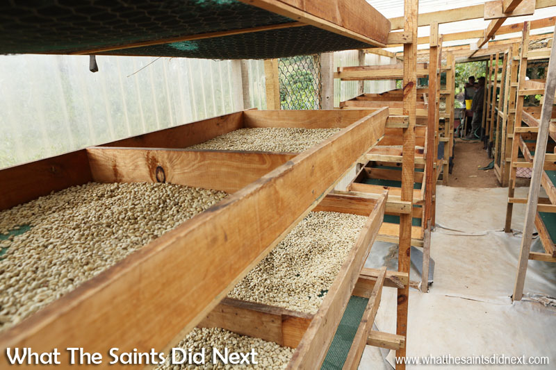 After washing the coffee beans is complete, this is the drying process that follows. St Helena Coffee by Solomon & Co.