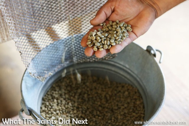 Polished coffee beans. St Helena Coffee by Solomon & Co.