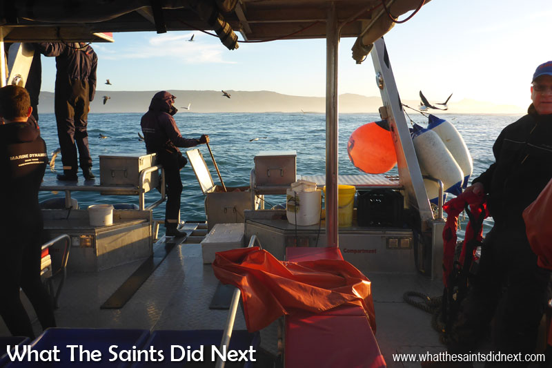 Out on a Great White shark cage diving tour. Our dive boat awaits in the early dawn light. 'Slashfin' is a custom made shark cage diving boat, very comfortable and very fast!