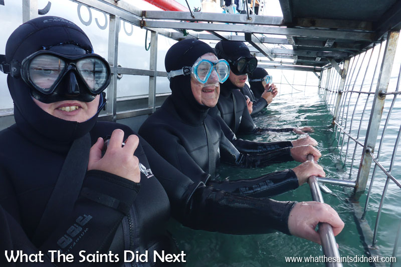This tops crazy bucket list ideas for us. Our fellow shark cage diving buddies, all lined up inside the cage.