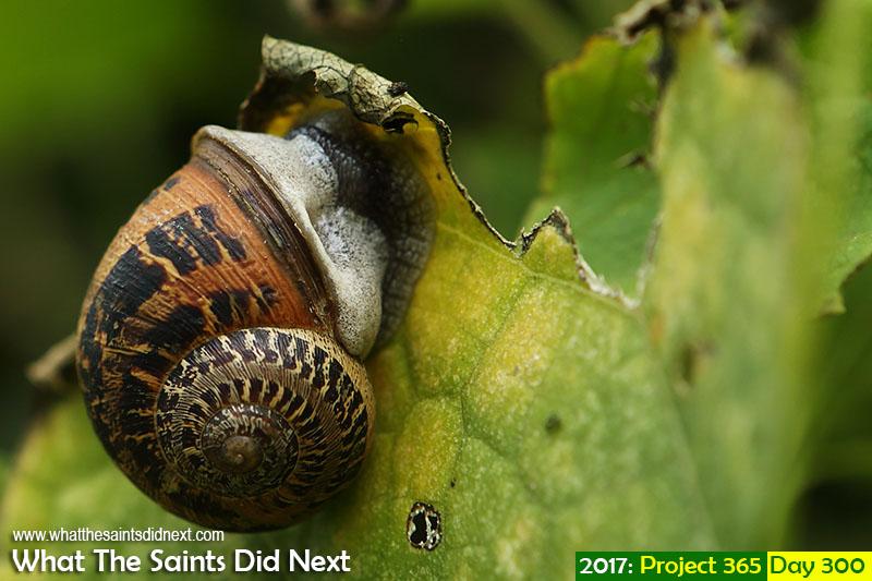 'Bad gas'<br /> 27 October 2017, 16:59 - 1/100, f5.6, ISO-200<br /> Garden snail.