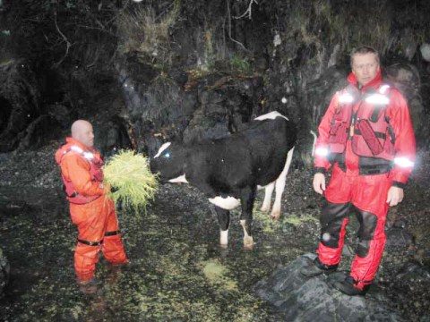 Jason van der Valk (right) and Unit 37 - Sooke with the cow.