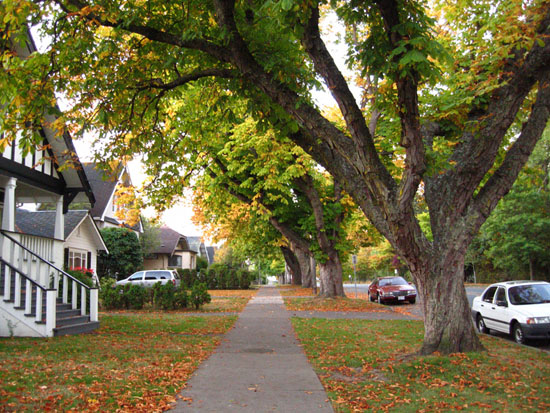Cook Street Village in the Fall