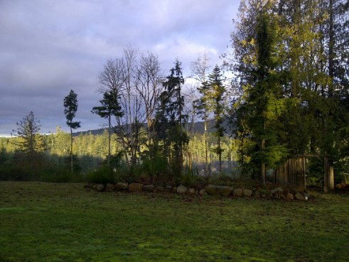 Another year, another Green Christmas for Sooke.