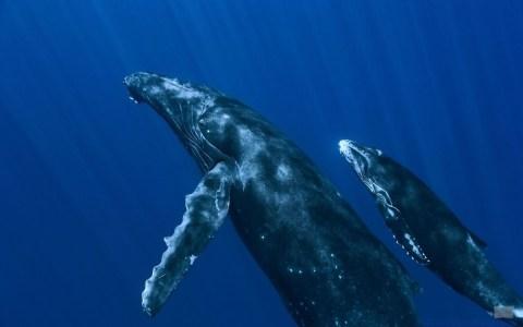 Топ-5 транзакций китов за последние десять дней