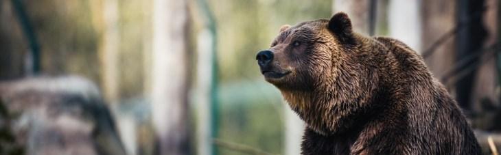 Цена биткоина опустится ниже $8550 на фоне грядущего медвежьего пересечения