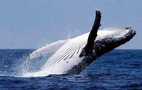 Отчет: Пять токенов, развернутых на эфириуме, пользуются особым спросом у «китов»