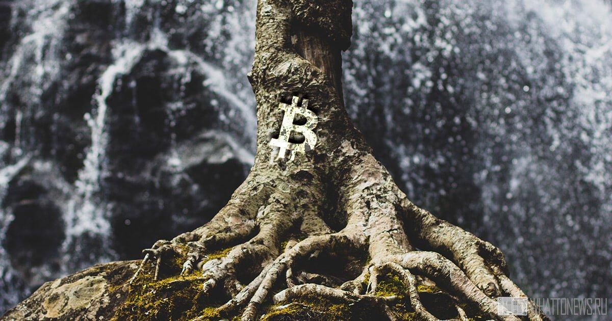 Как активация обновления Taproot повлияет на сеть Bitcoin