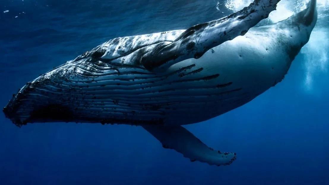 «Китов» не напугало падение биткоина до $35 500