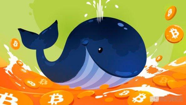 За две недели криптокит купил 729 биткоинов на $30 млн