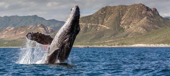 Ethereum-киты придерживаются накопительной тактики