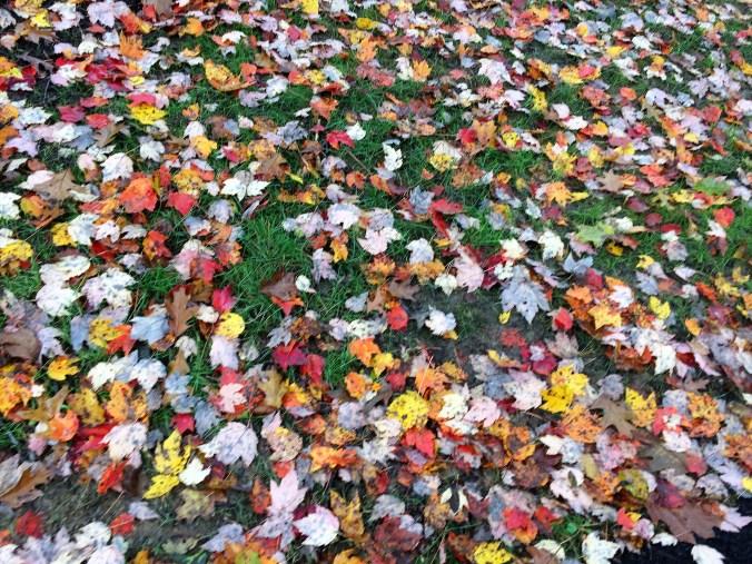 Leaves in the Hood