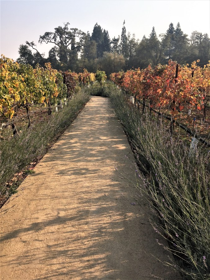 vineyard at Villagio