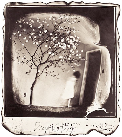 """""""Dreaming Tree, 2009"""" from the series Silent Moan, gelatin silver print by Michael Donnor (courtesy of the artist and Panopticon Gallery, Boston)"""