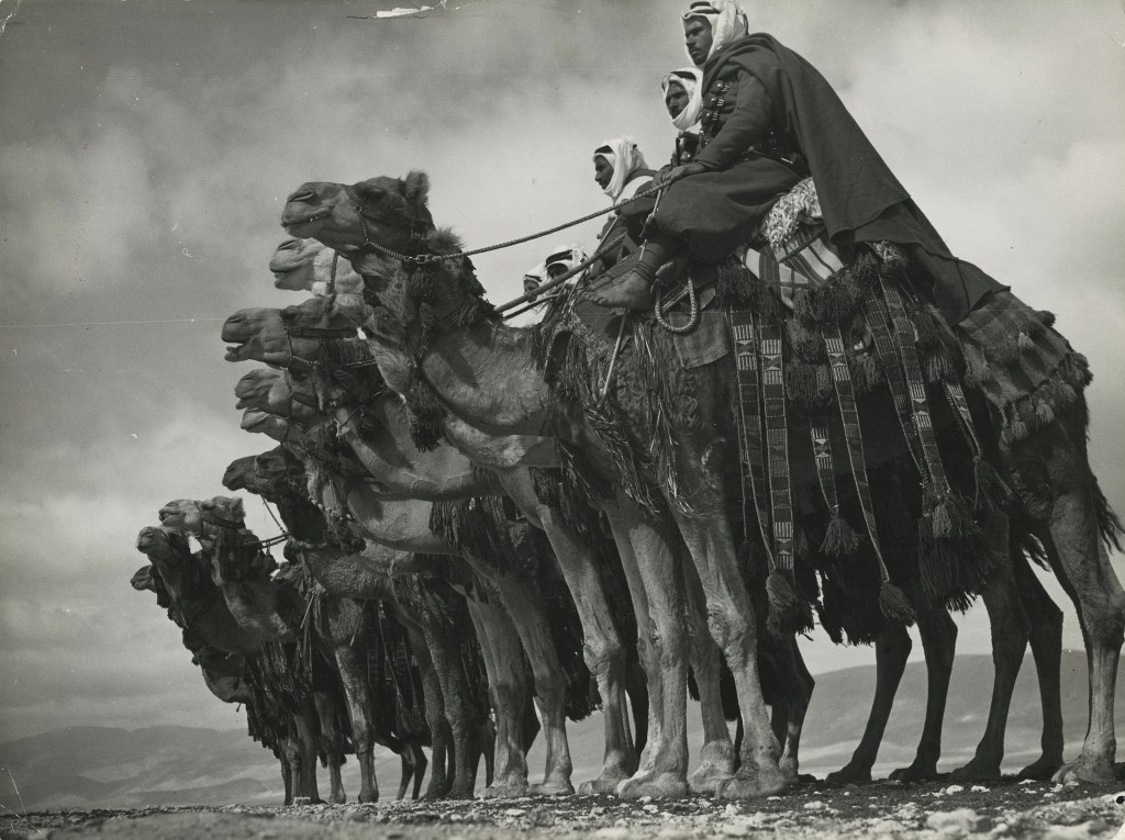 """""""Members of the native Bedouin camel cavalry, commanded by the French expeditionary force, posing on their she-camel mounts in desert near Damascus, Syria, 1940"""", gelatin silver print by Margaret Bourke-White, copyright  Time, Inc. (Courtesy of Howard Greenberg Gallery, NY)"""