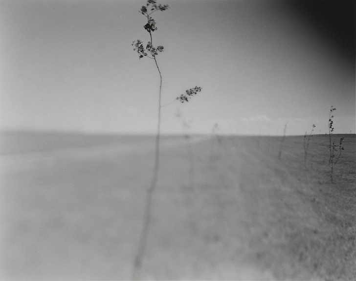 "Photograph by Andrea Modica from her latest monograph ""As We Wait"" (courtesy of the artist)."
