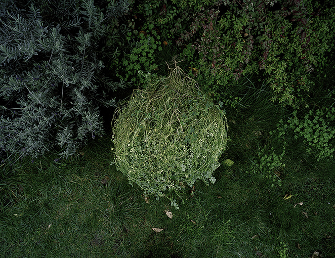 """""""Clover Tangle"""" from the series Nurturing Time, Life in a Backyard Garden by David Wolf, in DeCordova Museum's group show """"Overgrowth"""" (courtesy of the artist)."""