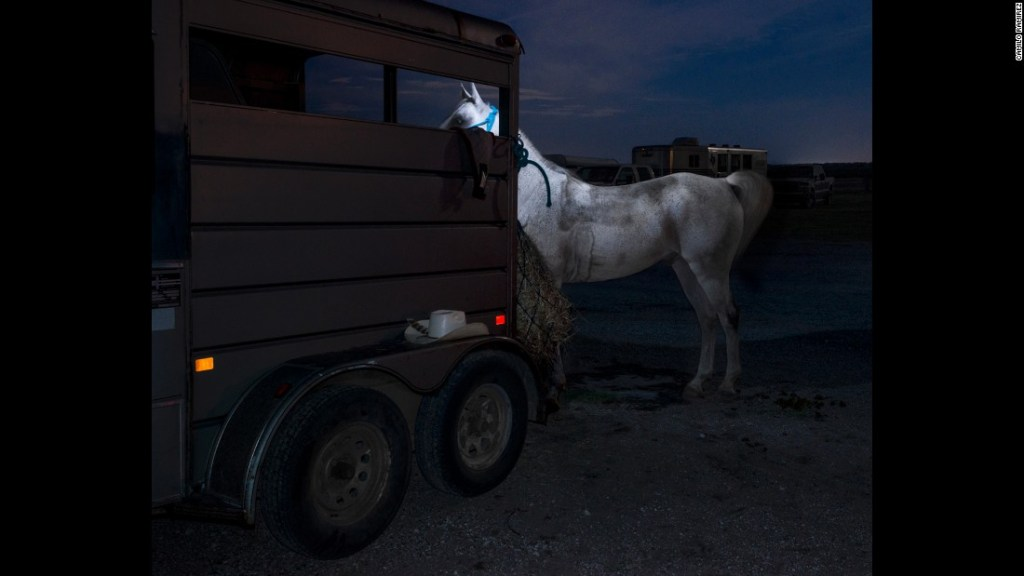 """""""Arabian Horse and Trailer, 2014"""" from The Gulf series by Camilo Ramirez (courtesy of the artist)."""