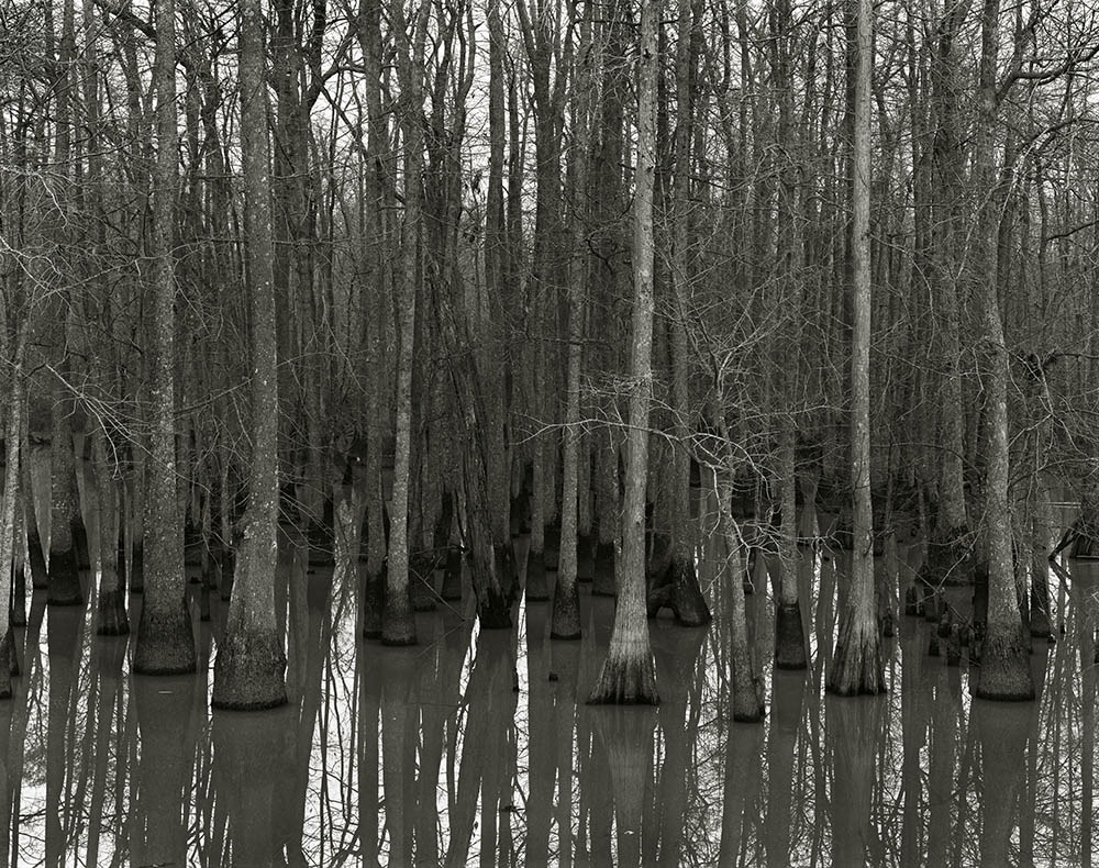 """""""Cache River, Arkansas, 1986"""" from the series Trees by Frank Armstrong (courtesy of the artist and Gallery Kayafas, Boston)."""