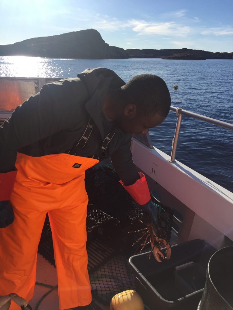 catching lobster in norway