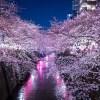 夜桜をiphoneで撮影するコツや設定とイチオシのおすすめアプリ
