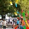 七夕の笹が売っている場所と笹の種類や価格の裏事情を暴露!