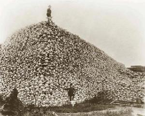 A Mass Grave - Evidence of Atrocities committed by European Americans