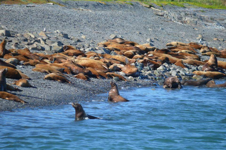 Sea lions on a rocky beach