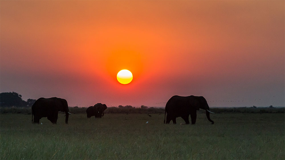 Elephants seen against a picturesque sunset in Africa