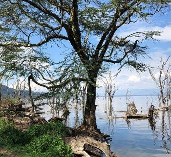 Lake shore in Lake Nakuru National Park, Kenya.