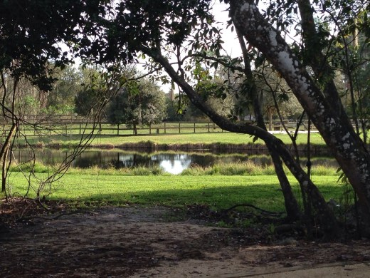 View of the dog park from the back of our site.