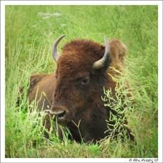 The Southern Prairies