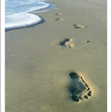 Footsteps in the Sand – Hunting Island, SC