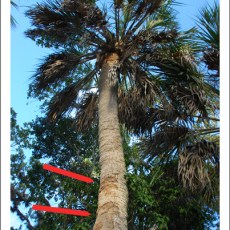The Story of the Big Tree that Wouldn't…